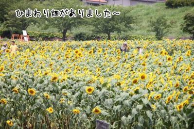 2013_07_26_9999_4.jpg