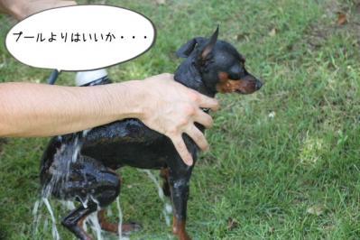 2013_08_03_9999_26.jpg