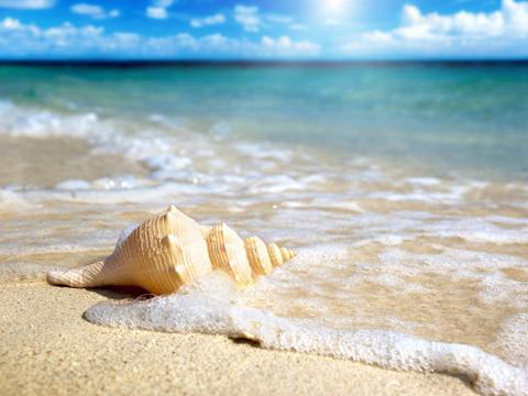Beach-Shell-1024x768.jpg