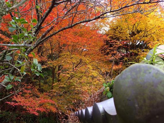 141118多田銀銅山紅葉-1