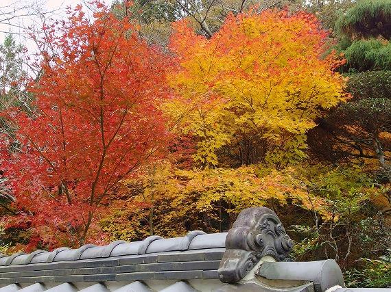 141118多田銀銅山紅葉-2