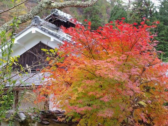 141118多田銀銅山紅葉-3