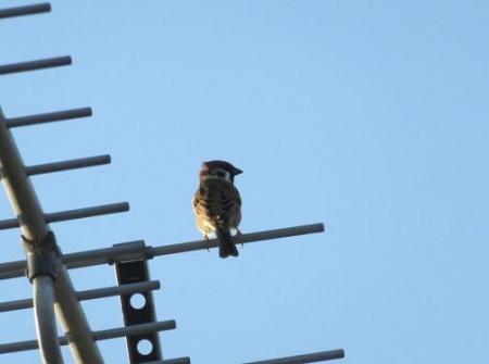 雀と鳩 002