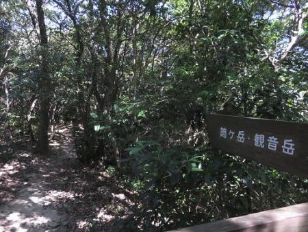 センブリと小岱山 077