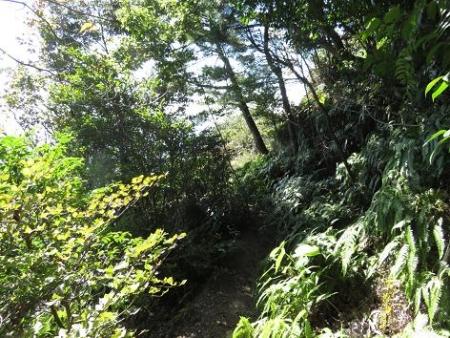 センブリと小岱山 133