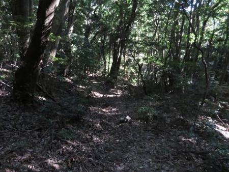 センブリと小岱山 155