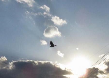 夕陽と鳥 013