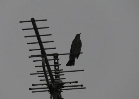 雨と鳩 002