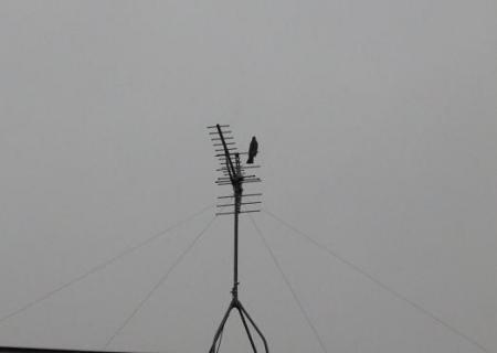 雨と鳩 001