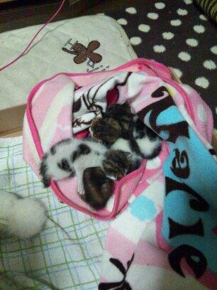 赤ちゃん猫4匹兄妹