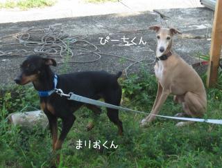 まりお+ぴーち