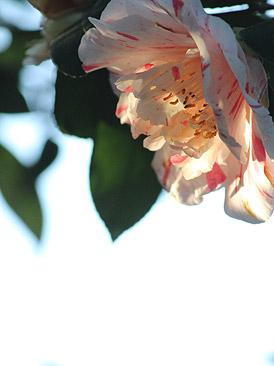 fb-1003.jpg