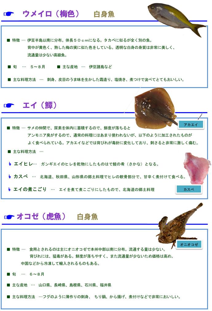 その他魚2