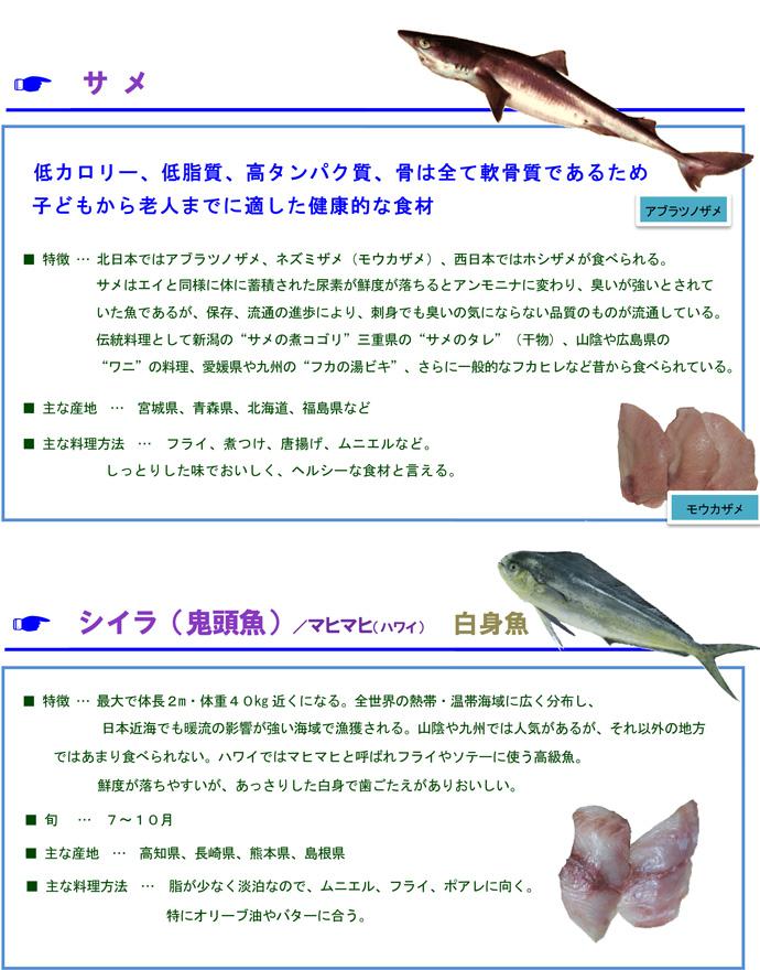 その他魚4