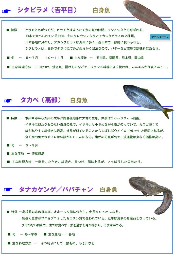 その他魚5