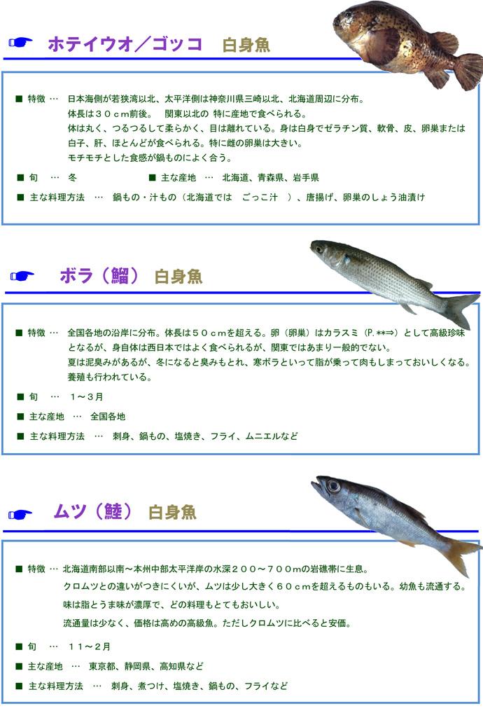 その他魚9