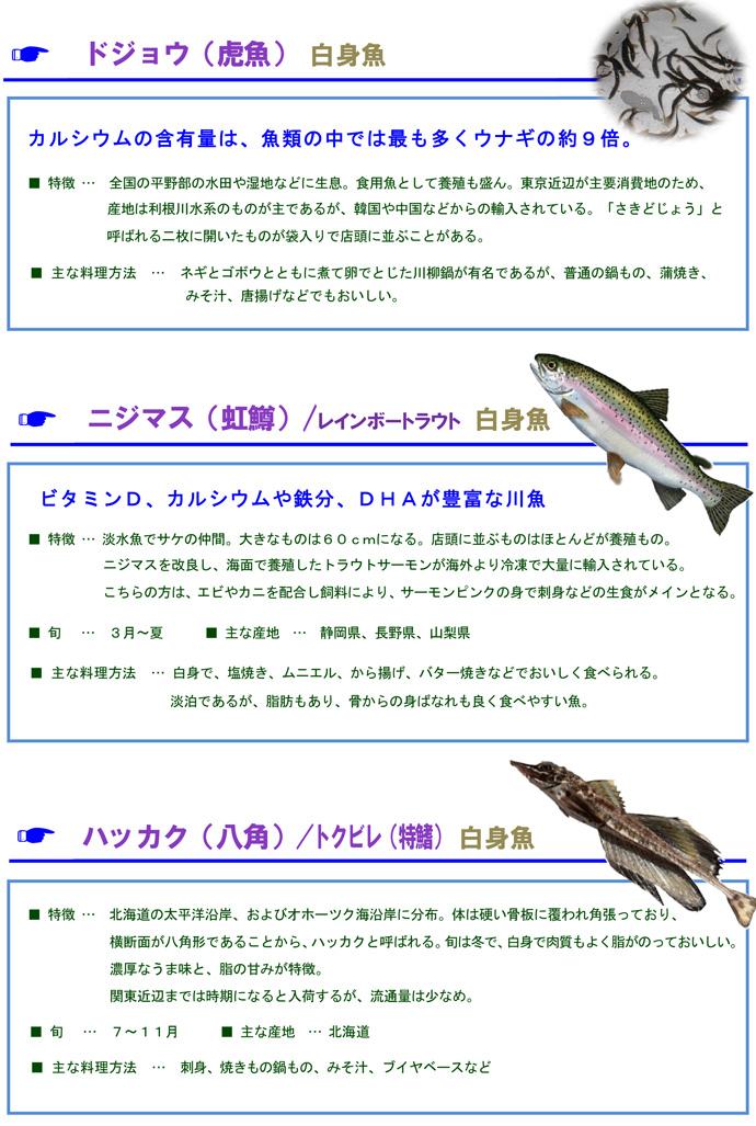 その他魚6