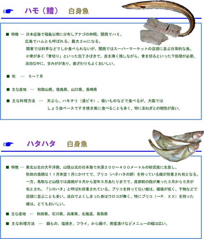 その他魚7