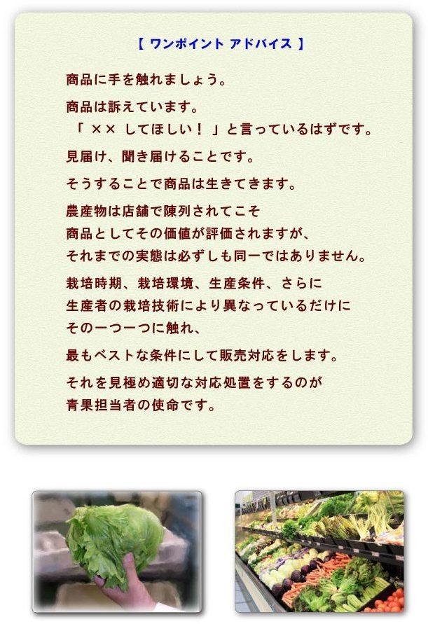 seika-1.jpg