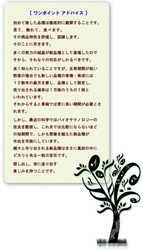 seika-7.jpg