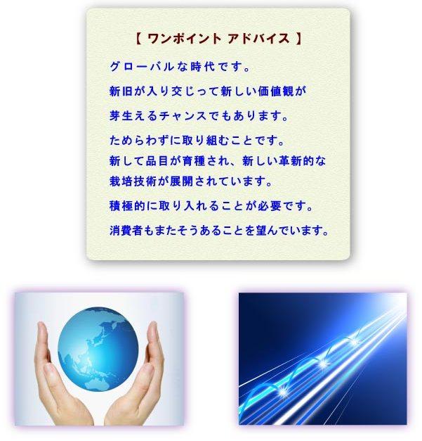 seika-8.jpg