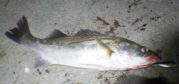 fishing080904.jpg