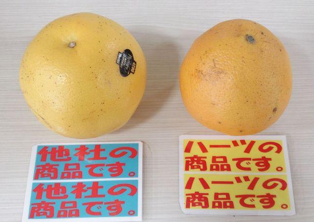 グレープフルーツ-2