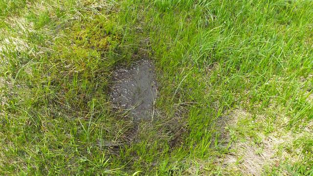 湿原……消えゆく運命