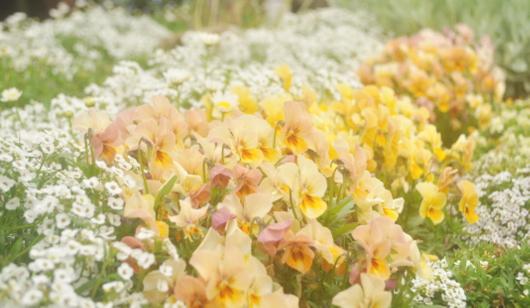 春の庭402-2