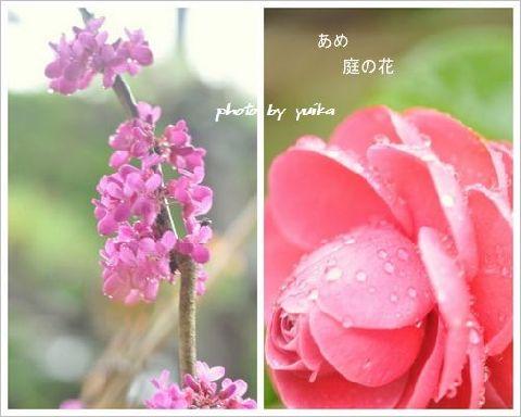 庭の花0406-3