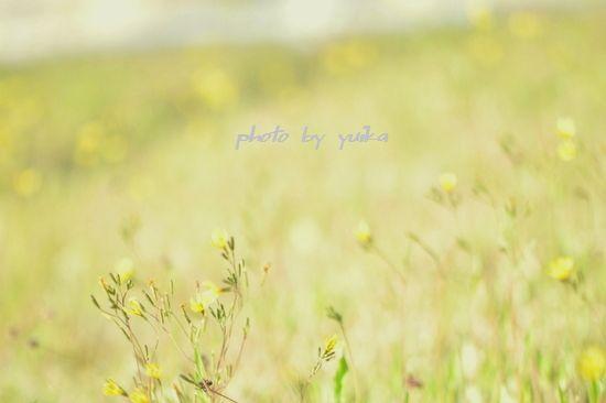 野の花508-2