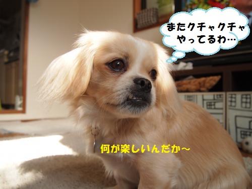 006_convert_20131206210743.jpg