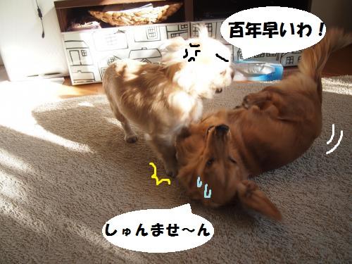 009_convert_20131203213136.jpg