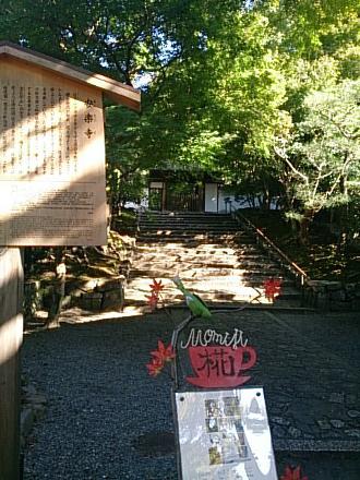 京都旅行201410250022
