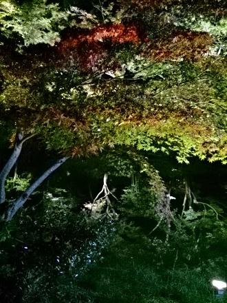 京都旅行201410250058(1)