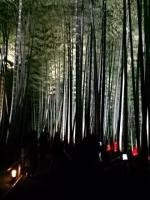 京都旅行201410250063
