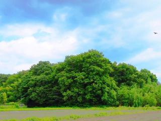 風景 夏 (13)