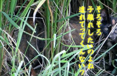 130912-野良子-6