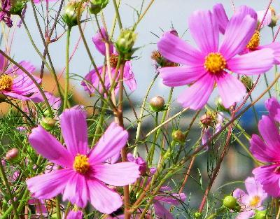 131007-公園の花-18