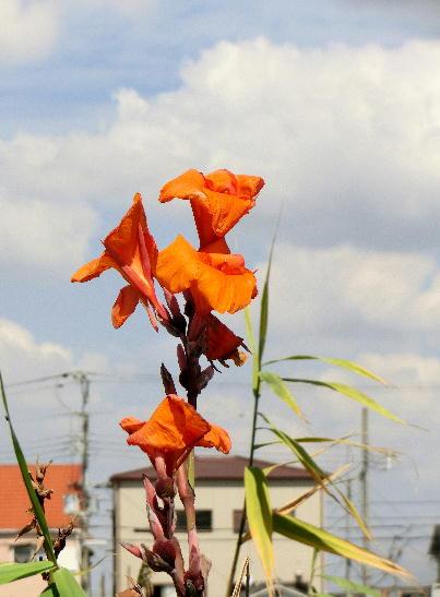 131007-公園の花-14