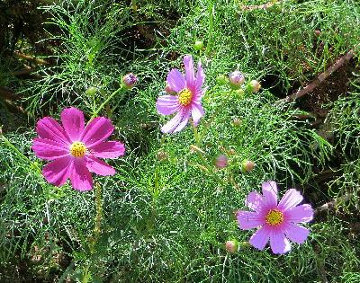131007-公園の花-11