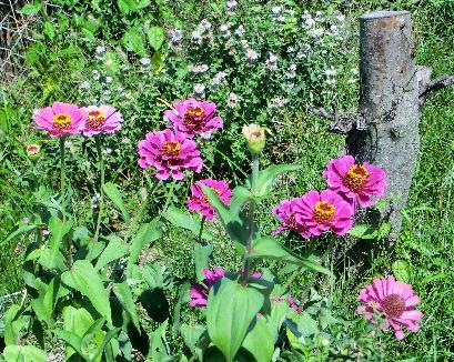 131007-公園の花-13