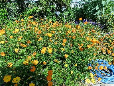 131007-公園の花-8