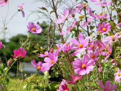 131007-公園の花-17