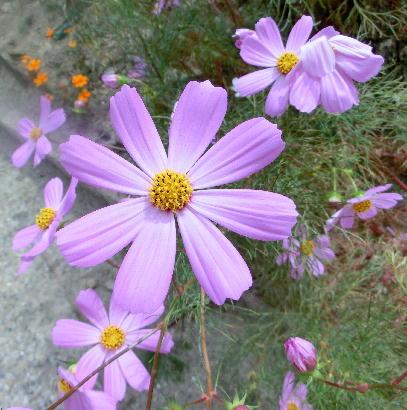 131012-公園の花-7