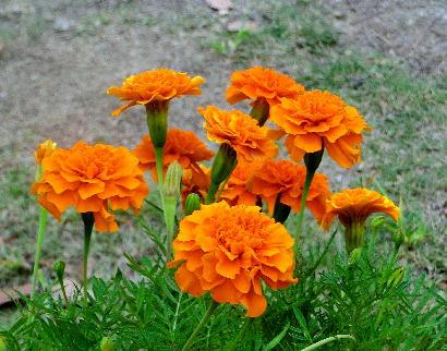 131012-公園の花-9