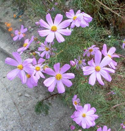 131012-公園の花-8
