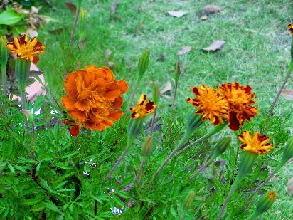 131012-公園の花-10