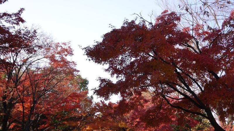 20131202梅小路公園01