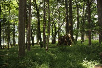 201308森きち32